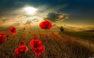 Evening sky and sun rays dropped to the flowers, New HD Wallpapers of nature