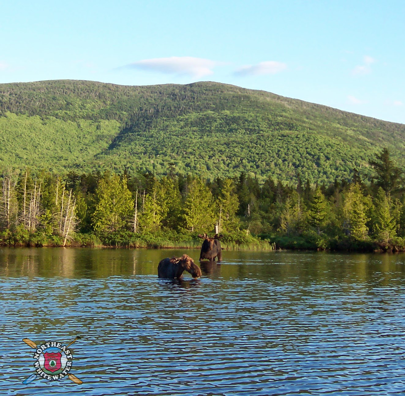 maine moose tracks greenville maine moose watching tours