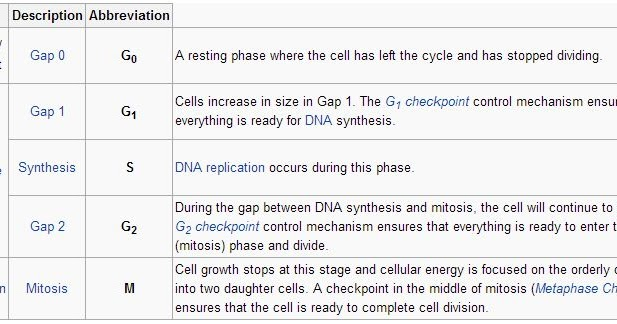 G1 Phase  S Phase  Synthesis   G2 Phase  Collectively
