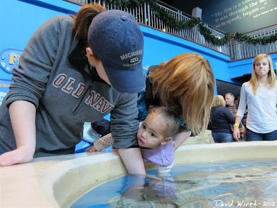 petting rays, aquarium, downtown gatlinburg, tennessee