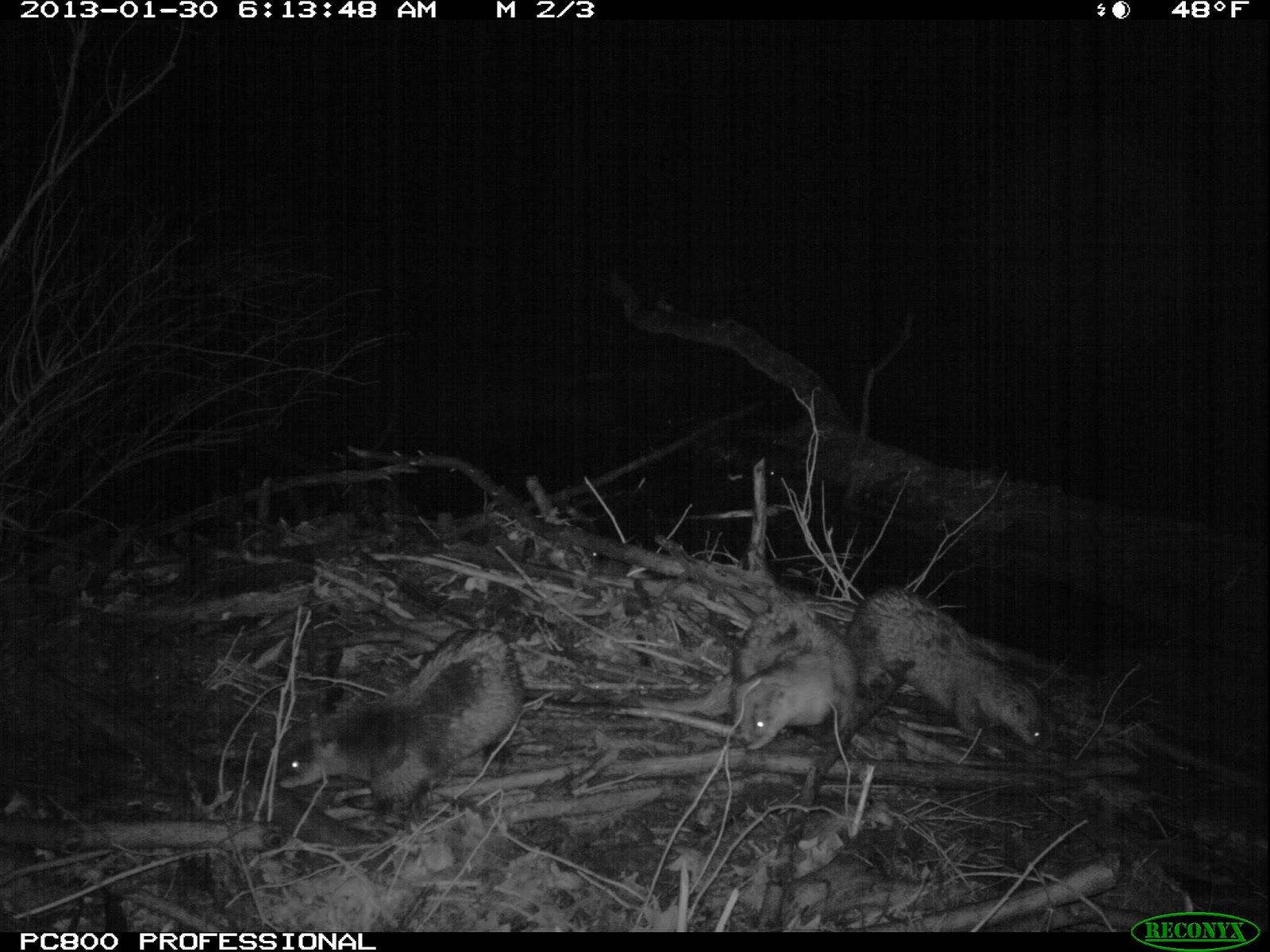 Bear eyes at night - photo#10