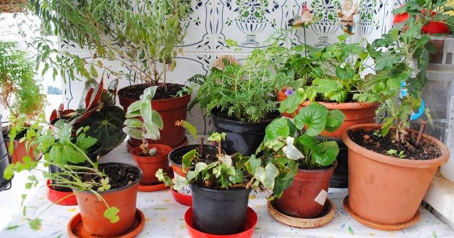 El cuaderno de campo d a de jardineria y medicina natural for Jardineria huelva