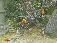 塩崎家の庭に目をやると、野鳥がきてる。