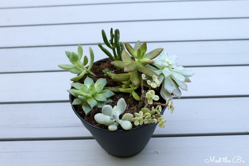 Easy housewarming gift idea! DIY painted succulent planter | Meet the B's