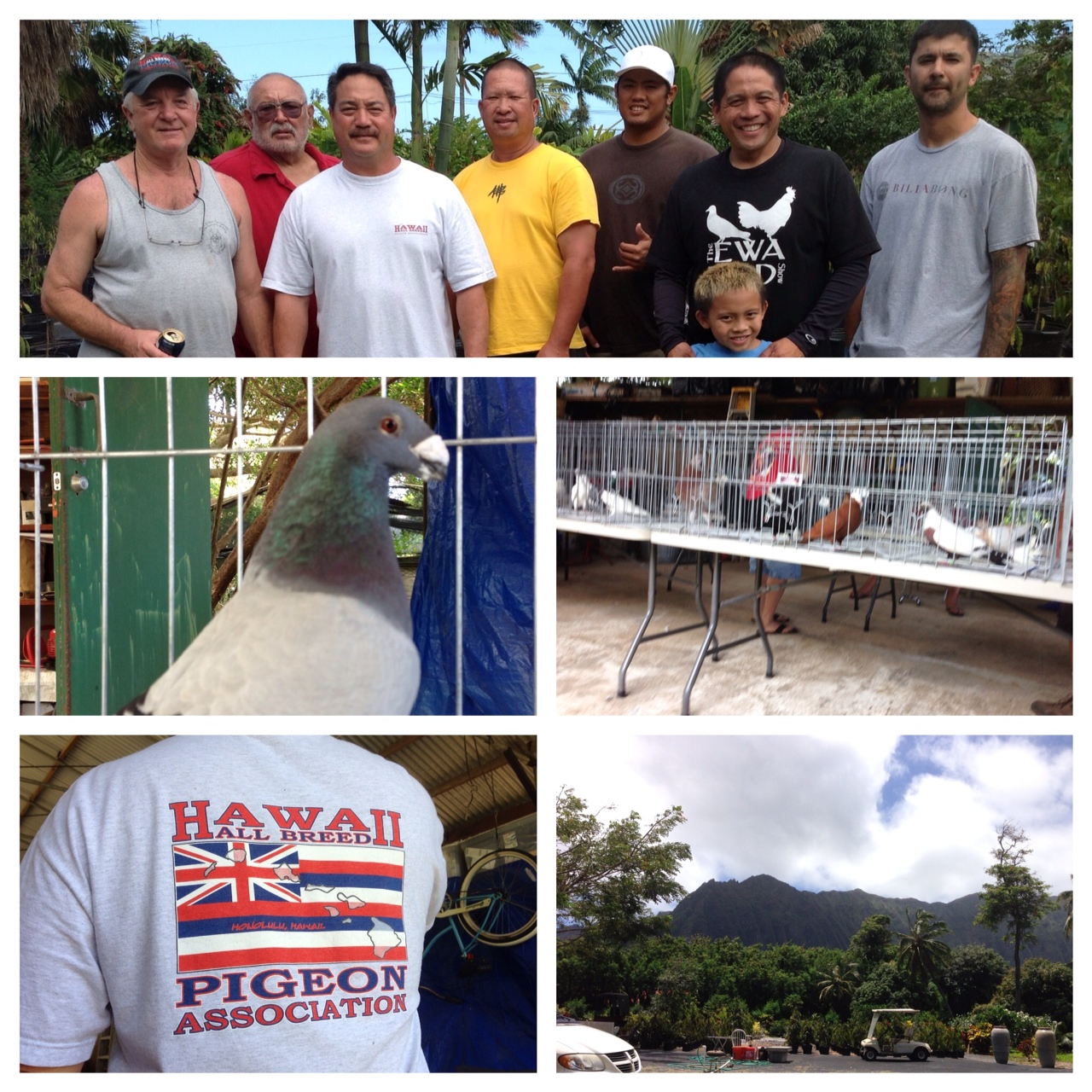 Hawaii all breed pigeon association spring show picture for Waimanalo feed supply