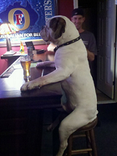 Network Engineer at a Bar
