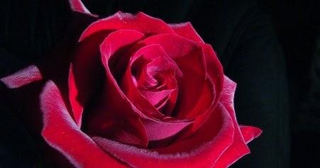 Flores y colores d tipos de flores y sus significados for Tipos de arboles y su significado