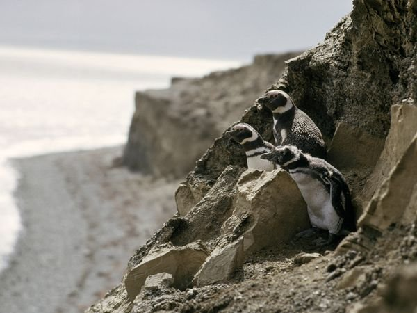 patagonia-wildlife-penguins