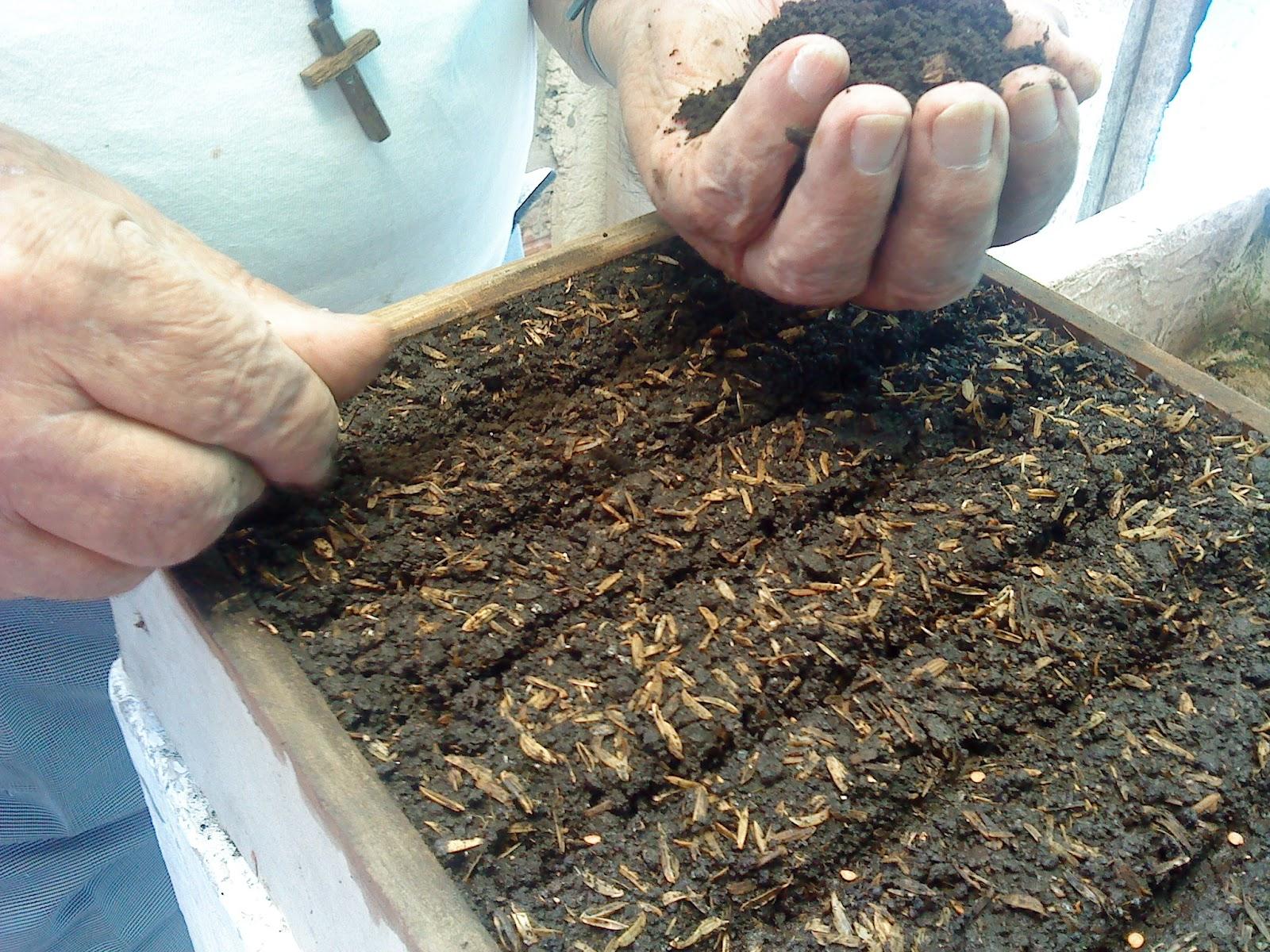 El cultivo del lulo udec - Tierra para semilleros ...