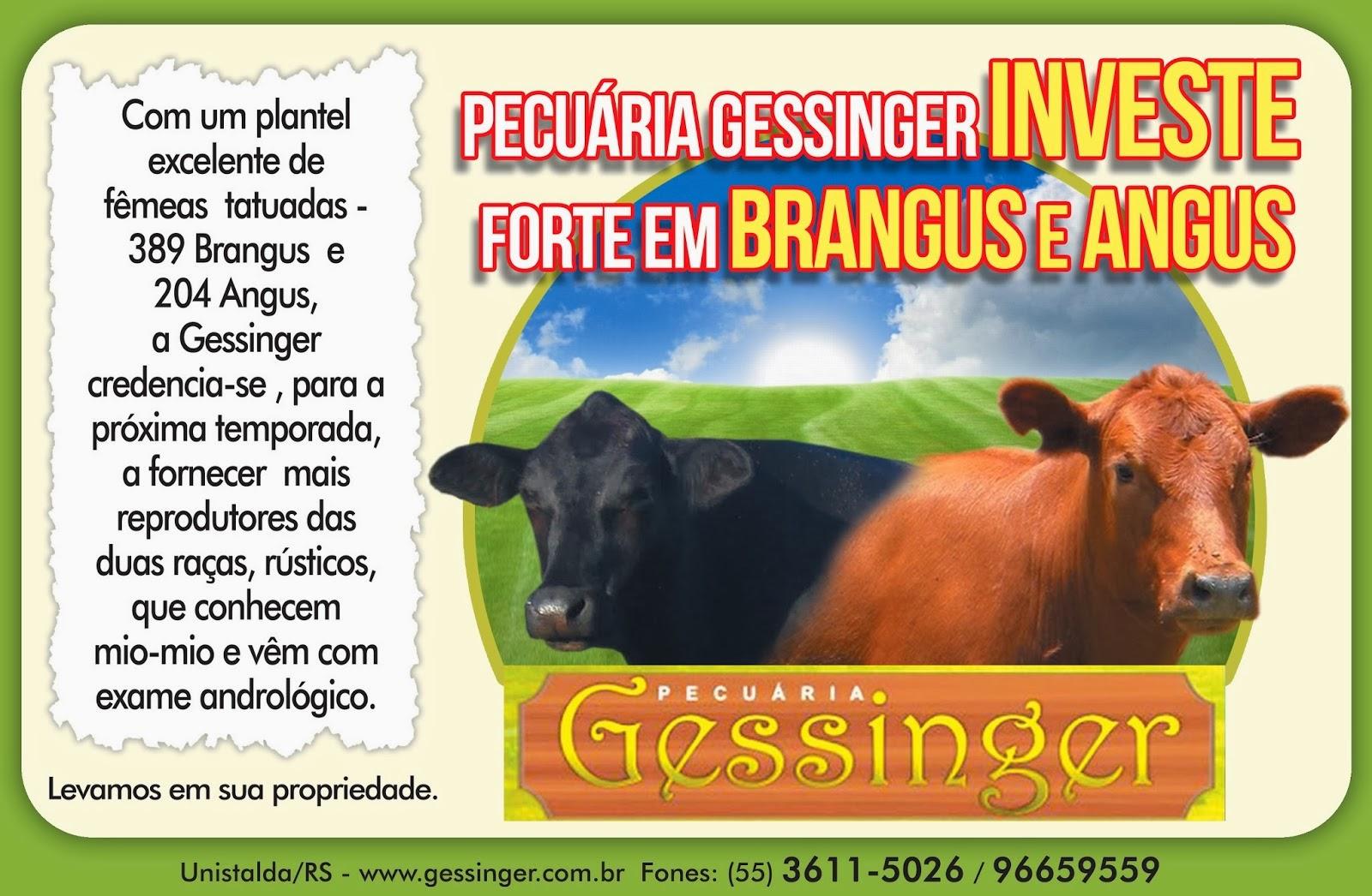 PECUÁRIA GESSINGER