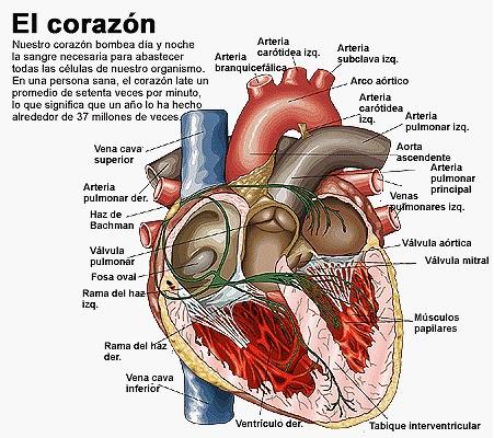 Entorno Natural 2012: Sistema Circulatorio y Corazón