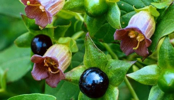 hierbas medicinales propiedades