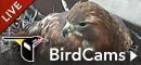 Bird Cams