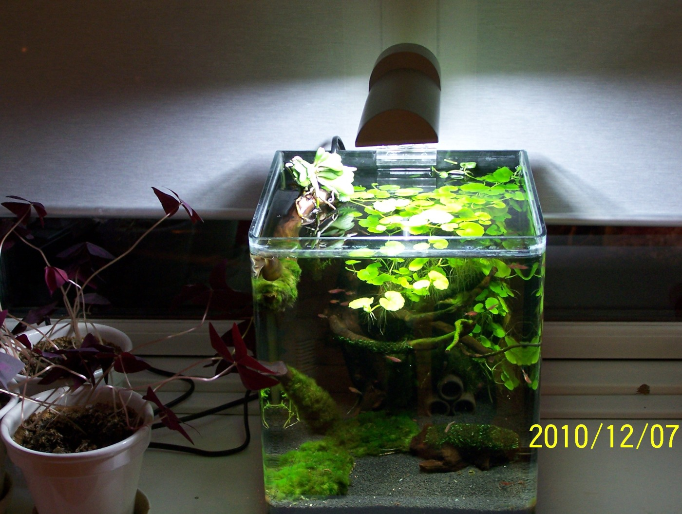 5 gallon fish tank 85 see the small card with the code for 5 gallon fish tanks