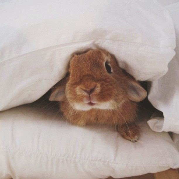 Funny animals of the week - 9 May 2014 (40 pics), cute animals, animal photos, cute bunny under a pillow