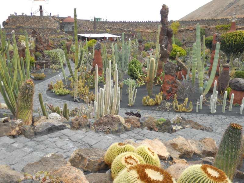 Puerta al sur decor tu casa con plantas suculentas o for Jardines con cactus