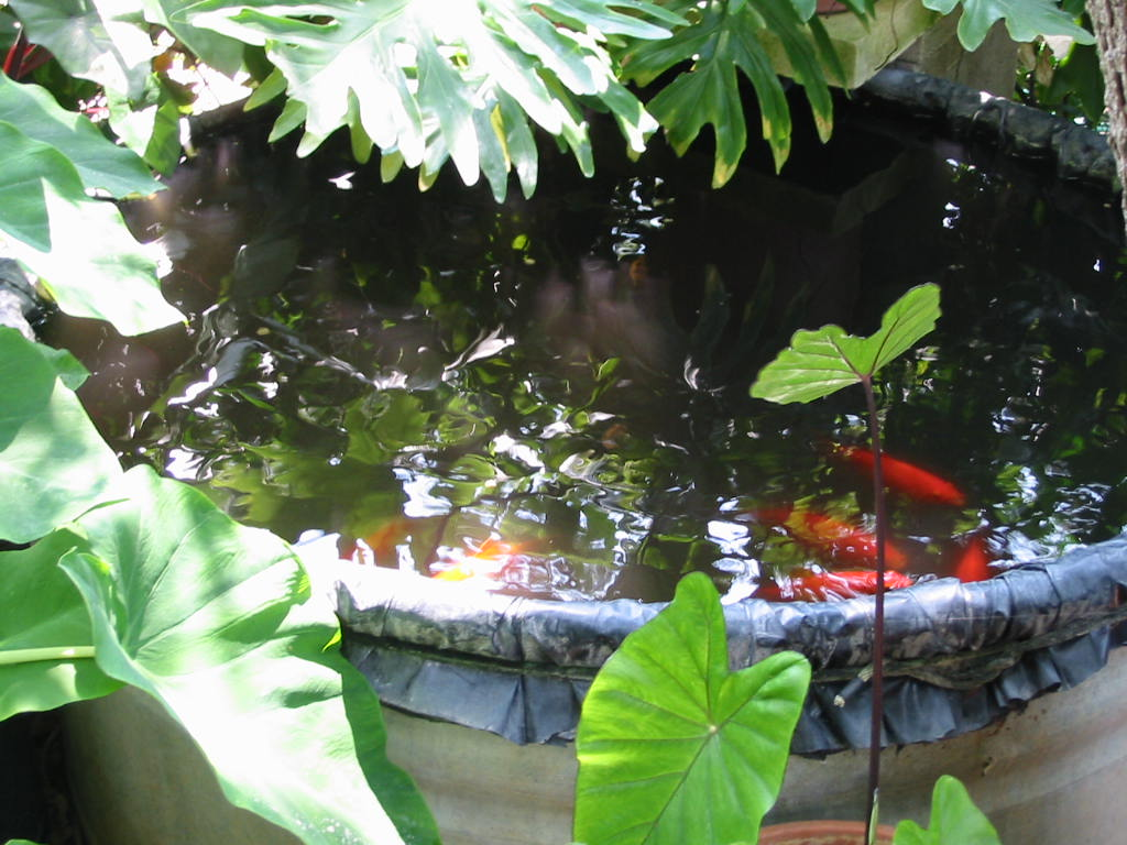 Filter system for turtle tank filter free engine image for Koi pond tubs