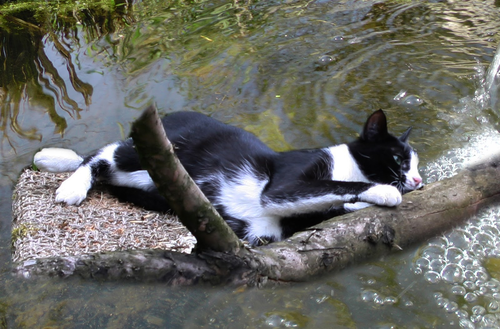 Wie ich den graureiher erfolgreich vom teich und den for Teich schutz