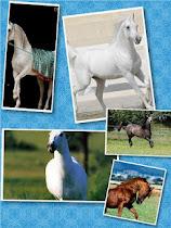 ألبومات صور الخيول