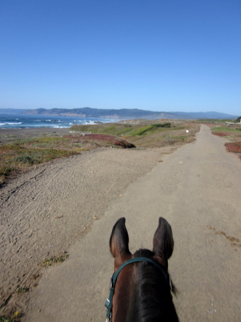 Bull Riding In Va Beach