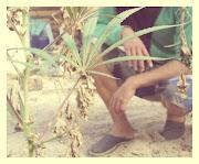 Fotos de faso mariguana fotos de faso