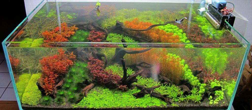 6 cara membuat dan menghias aquascape air tawar dengan mudah bisnis borneo - Gambar aquascape ...