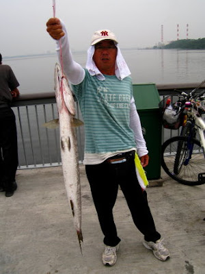 Barracuda also know as Saw Kun 沙君 or Ikan Kacang Caught by Ah Goh weighing 5kg plus at Woodland Jetty on 4th Jun 2011 Fishing Hotspots was created to share with those who are interested in fishing on tips and type of fishes caught around Woodland Jetty Fishing Hotspots.