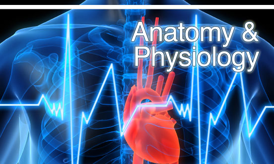 Anatomy and pysiology