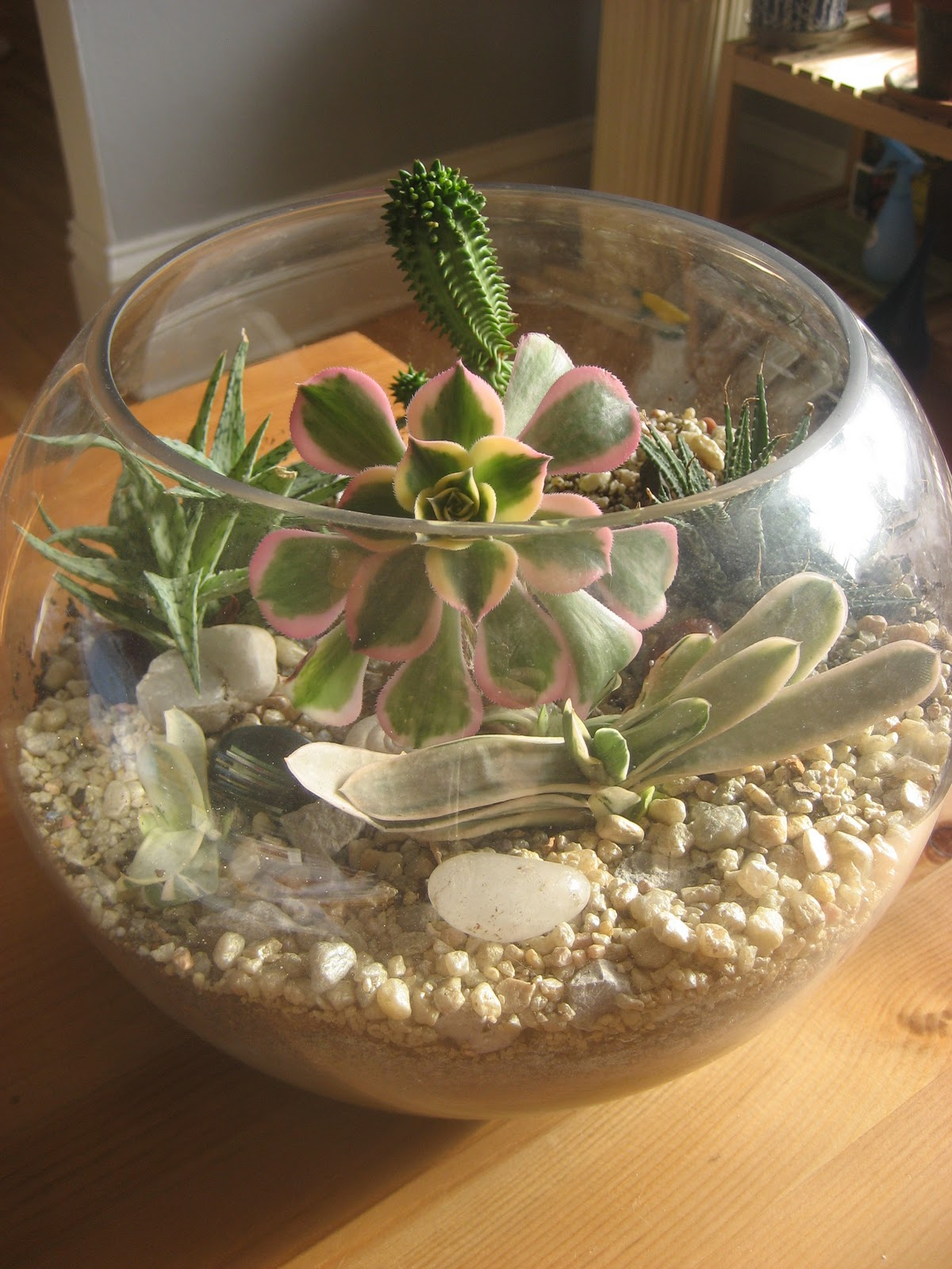 how to make a cactus terrarium in a fish tank