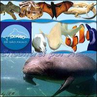 Aquário de São Paulo. Mais de 300 espécies em 2 milhões de litros de água, numa área de 9 mil metros quadrados