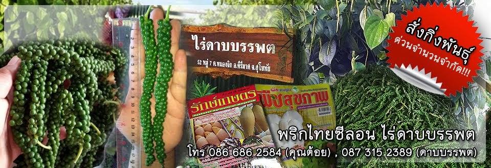 พริกไทยซีลอน ไร่ดาบบรรพต | PigthaiSeelon.com