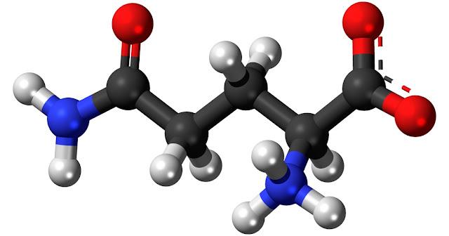 Aminoacidos y glutamina