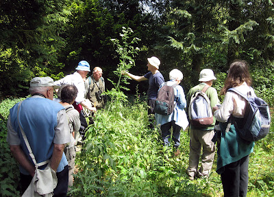 Orpington Field Club at High Elms Country Park, 4 June 2011.  Some of the group examining a hemlock, Conium maculatum.