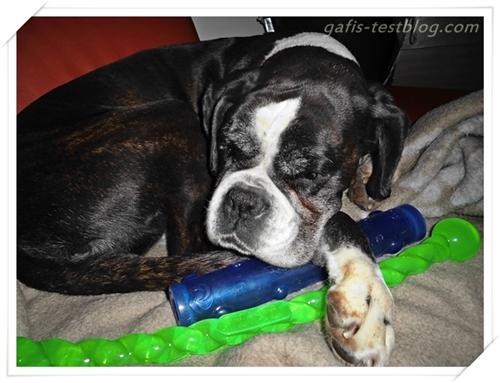 Boxer Ivy mit dem KONG Safestix und KONG Squeezz Stick
