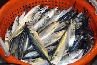 Catch Herring Mackerel mix