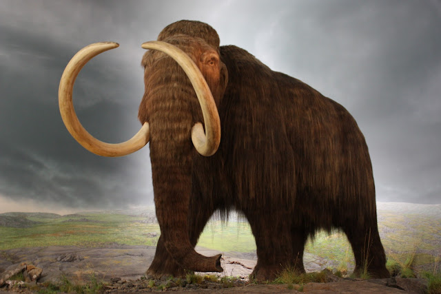 Woolly Mammoth To Be Cloned By Korean Scientists