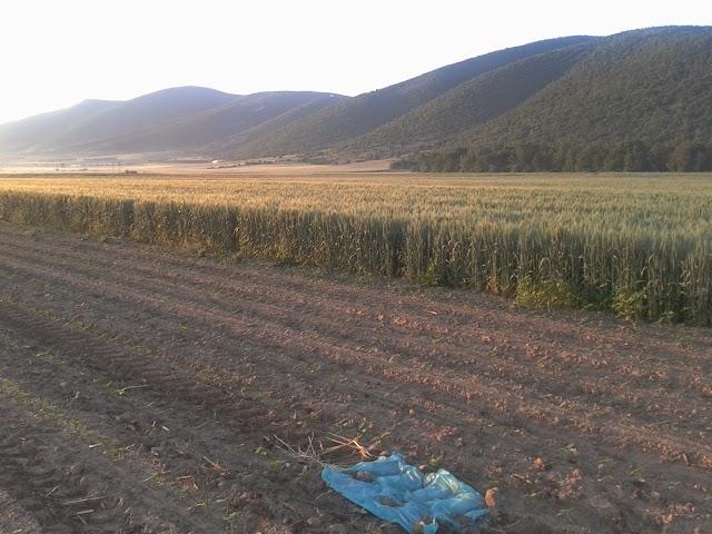 Καταγγελία της Κυνηγετικής Ομοσπονδίας Μακεδονίας – Θράκης για τοποθέτηση δηλητηριασμένης ζωοτροφής με σκοπό την θανάτωση άγριων θηλαστικών (αγριόχοιρων)