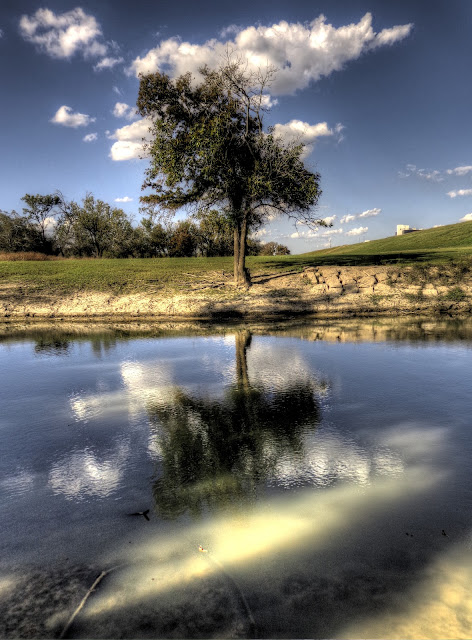 Mirrored tree on water - Buffalo Bayou at Geoger Bush Park in Houston Texas - HDR