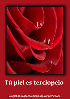 piel como las rosas rojas Fotos de rosas rojas para facebook