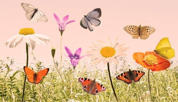 Kesä ja perhoset
