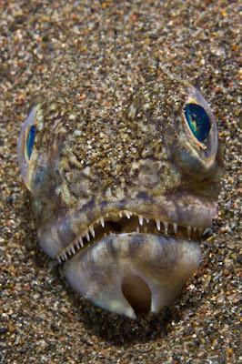 fish-in-sand_underwater