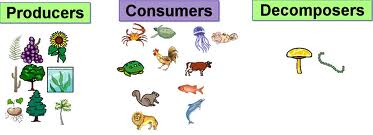 Worksheets Producers Consumers And Decomposers Worksheet interactions with ecosystems what are producers consumers and decomposers