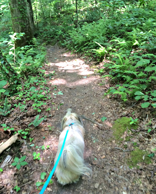 Hiking with Rocco Havanese at Tumbling Waters trail near Tails Creek