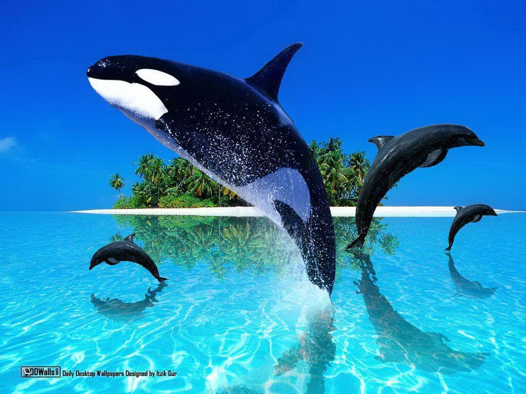 Amazing Orca Fish 1024 x 768 · 134 kB · jpeg