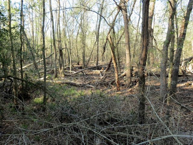 Fallen trees at  Armand Bayou Nature Center.