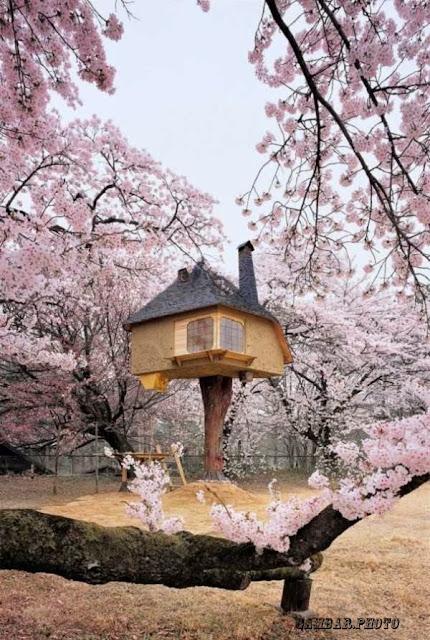 gambar foto rumah unik seluruh dunia
