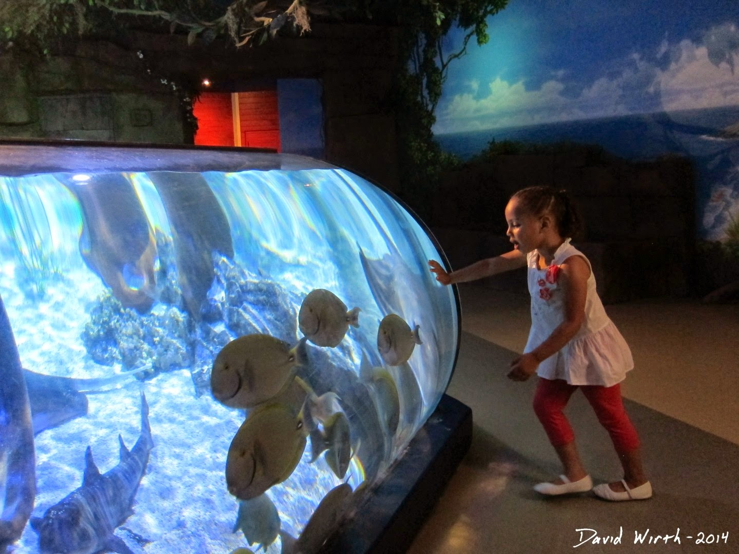 legoland, aquarium, kids, california
