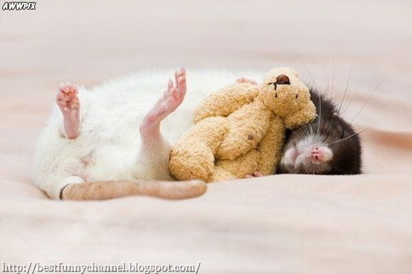 Funny rat.