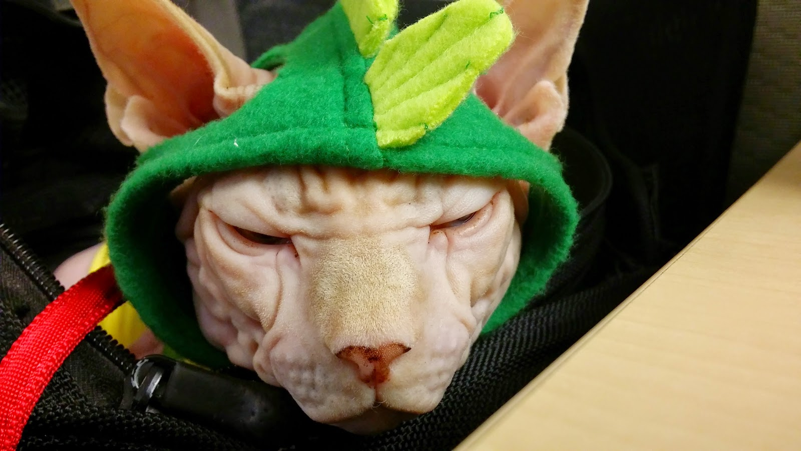 Dress up your pet day - From The Ridiculous To The Sublime Dressing It Up Is What We Do