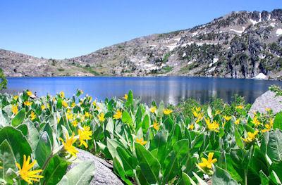 Lago en las montañas nevadas rodeado de flores amarillas